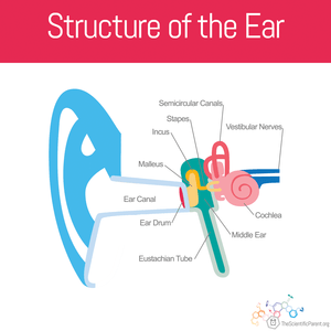 The Dreaded Ear Infection Children S Physicians Medical Group